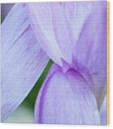 Purple Crocus 3 Wood Print