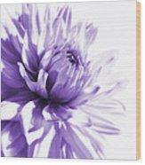 Purple Dahlia Floral Wood Print