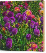 Purple Dahlias Wood Print