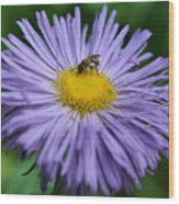 Purple Daisy And Guest Wood Print