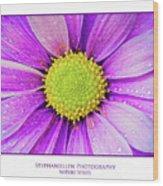 Purple Daisy Wood Print
