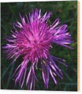 Purple Dandelions 4 Wood Print