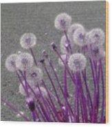 Purple Dandelions Wood Print