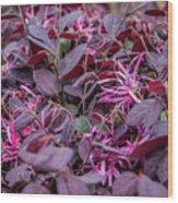 Purple? Wood Print