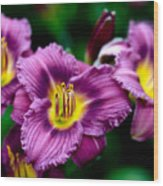 Purple Day Lillies Wood Print