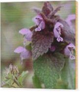 Purple Deadnettle Bloom Wood Print
