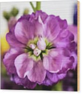 Purple Delphinium Wood Print