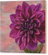 Purple Dhalia Wood Print