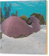 Purple Doze  Wood Print