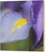 Purple Dutch Iris Flower Macro Wood Print