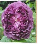 Purple English Rose Wood Print