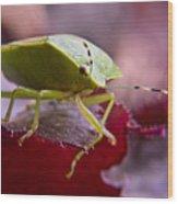 Purple Eyed Green Stink Bug Wood Print