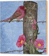 Purple Finch And Morning Glories Wood Print