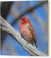 Purple Finch In Spring Wood Print