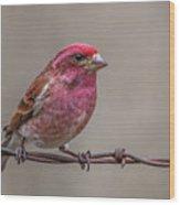 Purple Finch On Barbwire Wood Print