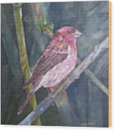 Purple Finch Wood Print