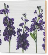 Purple Floral 1 Wood Print