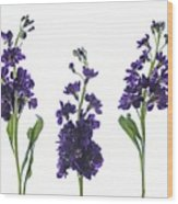 Purple Floral 2 Wood Print