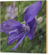 Purple Flower 2 Wood Print