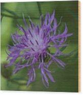 Purple Flower 8 Wood Print