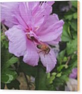 Purple Flower And Friend Wood Print by Guy Ricketts