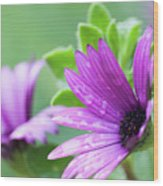 Purple Flower Closeup Wood Print