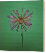 Purple Flower Green Background Wood Print