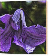 Purple Flower II Wood Print