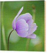 Purple Flower Looking Right Side Wood Print