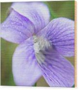 Purple Flower Macro Wood Print