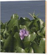Purple Flower On Bayou Wood Print