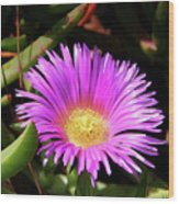Purple Flower On California Coast Wood Print