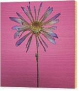Purple Flower Pink Background Wood Print