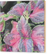Purple Flowering Plant Wood Print