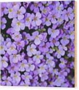 Purple Flowers - Rockcress Wood Print