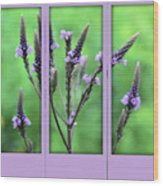 Purple Flowers Through A Window Wood Print