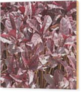 Purple Foliage Wood Print