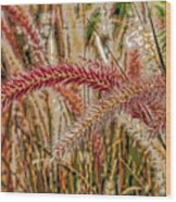 Purple Fountain Grass Abstract By H H Photography Of Florida Wood Print