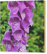 Purple Foxglove Wood Print