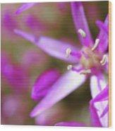 Purple Fragrance Wood Print