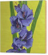 Purple Gladiolas Wood Print