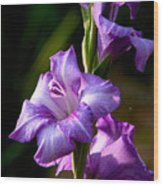 Purple Glads Wood Print