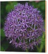 Purple Globe Thistle Wood Print