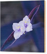 Purple Heart Flowers Wood Print