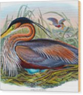Purple Heron Antique Bird Print John Gould The Birds Of Great Britain Wood Print
