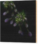 Purple Hosta Budding Duo - Macro Wood Print