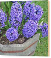 Purple Hyacinth Flowers Planter Wood Print
