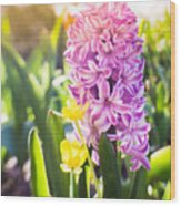 Purple Hyacinth Wood Print