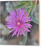 Purple Ice Flower Close Up Wood Print