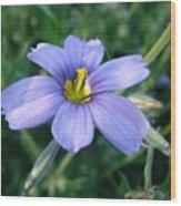 Purple In The Wild Wood Print